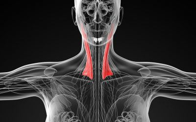 The twists and turns of torticollis (wry neck)